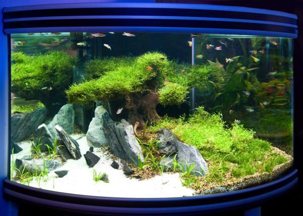 Растения в аквариуме растущие на