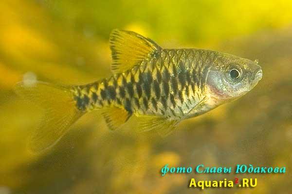 http://aquaria2.ru/files/images/CRW_1101.jpg