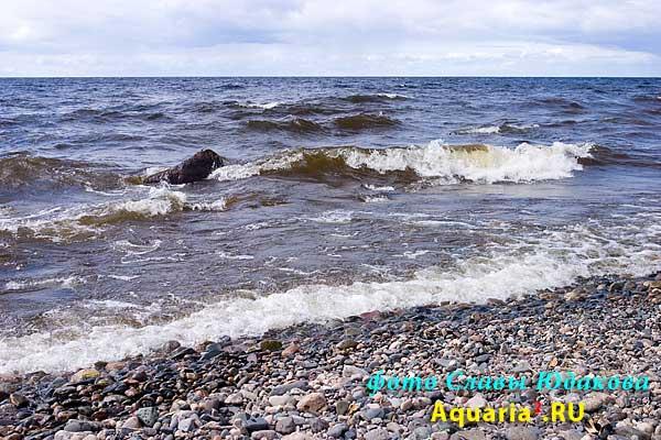 а это уже Онежское озеро