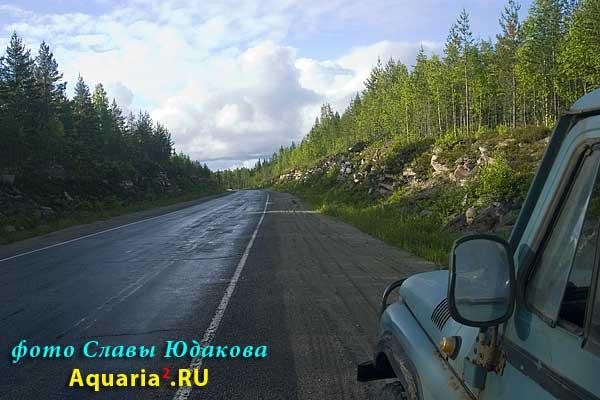 это уже мурманская трасса, типичный вид за Медвежьегорском