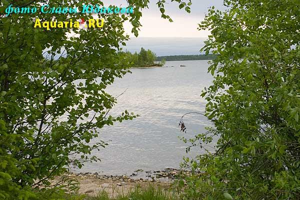 берег озера Имандра