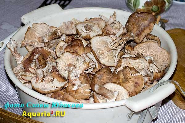 тазик с грибами