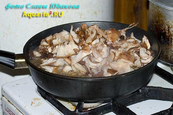 Сухие почищенные грибы я режу на куски среднего размера и выкладываю на раскаленную сковородку.