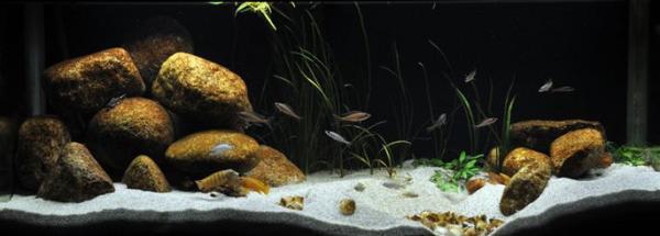 http://aquaria2.ru/files/u168/2010/imageGen.jpeg