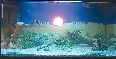 2. Гатиятуллин И.А. «Мексиканский закат»