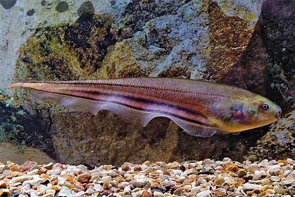 рыба северной америки рыбалка