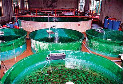 Опытная рыборазводческая ферма Института рыбоводства