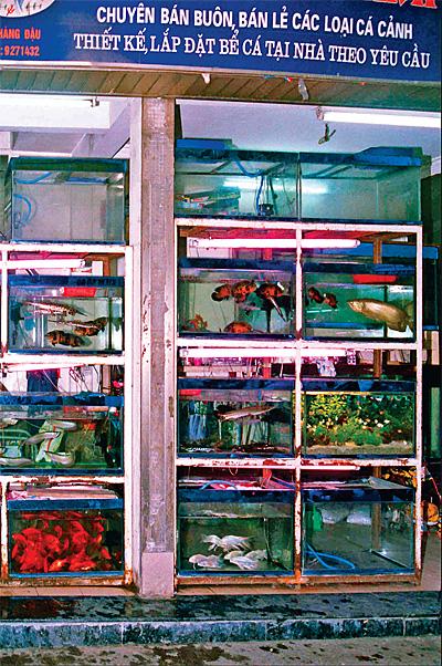 Один из зоомагазинов Ханоя
