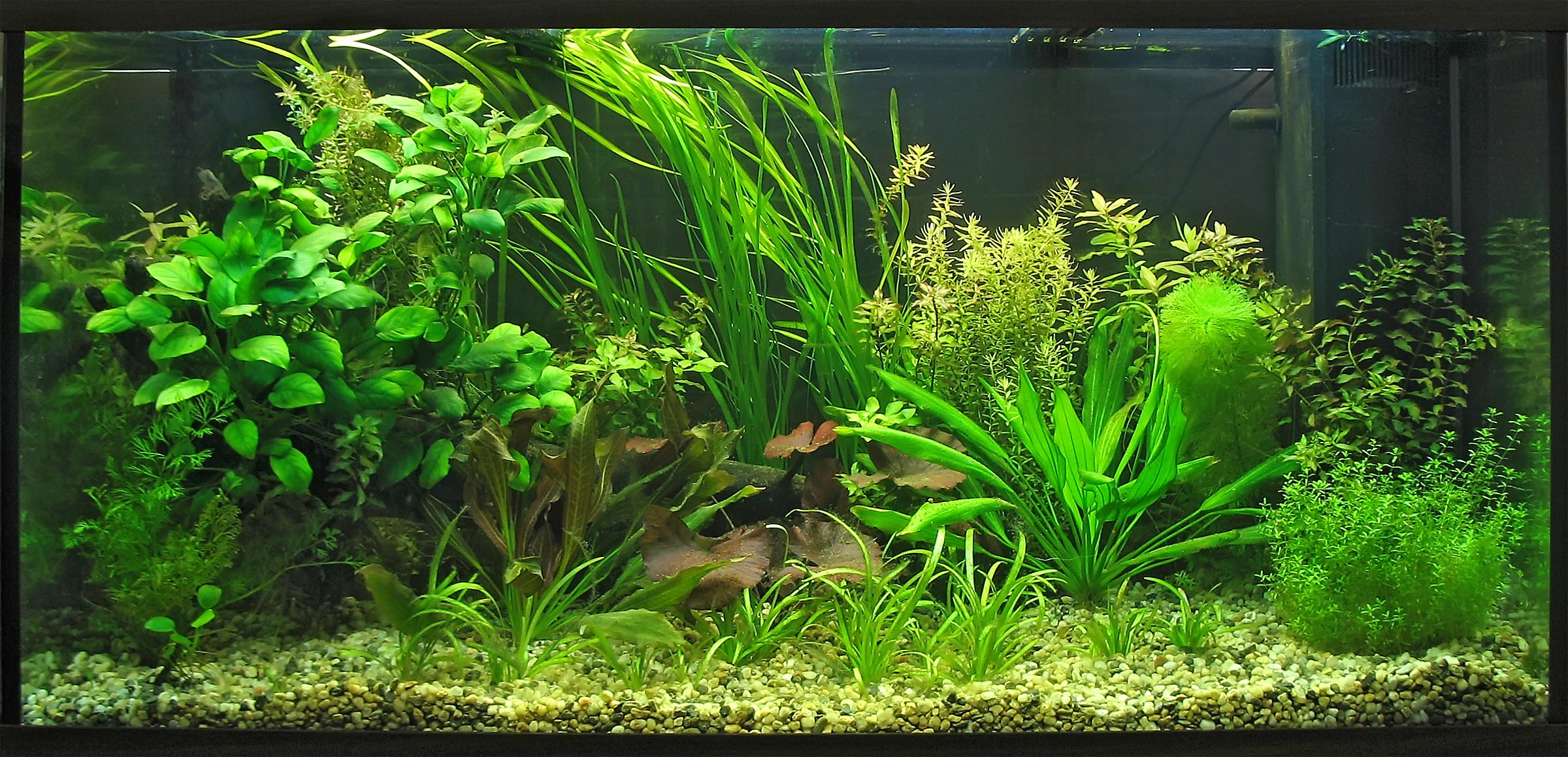 Как выращивать аквариумные растения