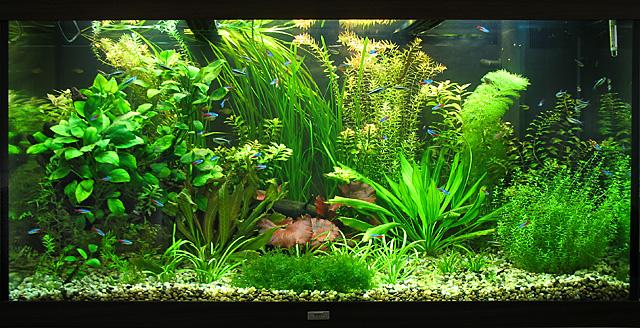 Фон для аквариума в картинках