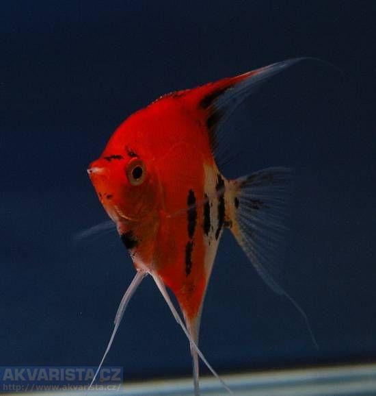 http://aquaria2.ru/files/u2354/________________0.jpg