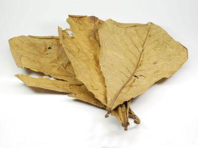 Terminalia catappa, Миндальный лист
