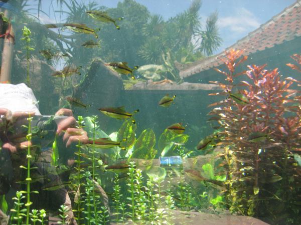 Это типо в зоопраке, аквариумы с типичными представителями.