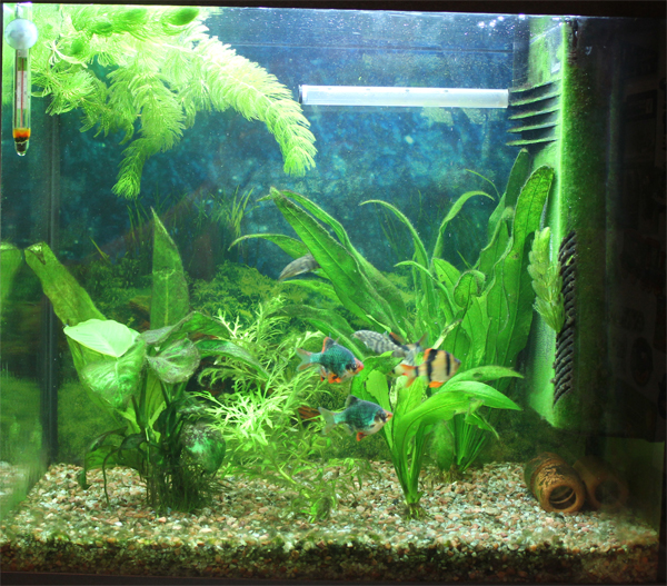 Лампа на аквариум своими руками