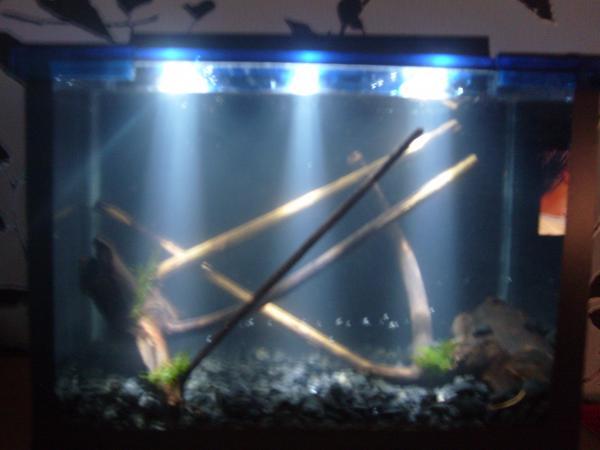 Своими руками светодиодная подсветка для аквариума